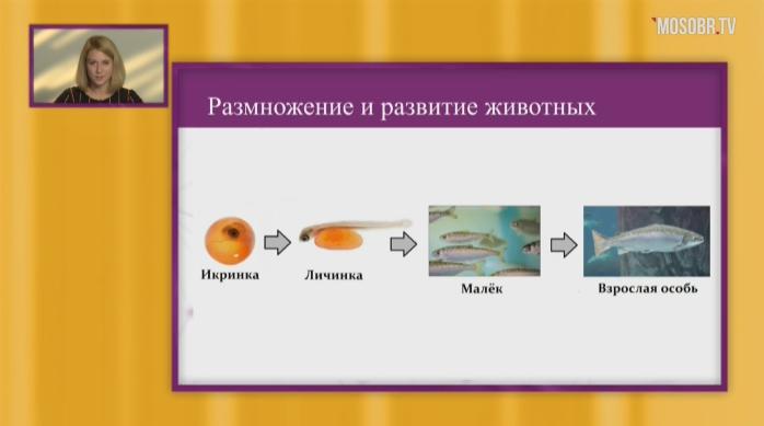 Окружающий мир, 3 класс. «Размножение и развитие животных»
